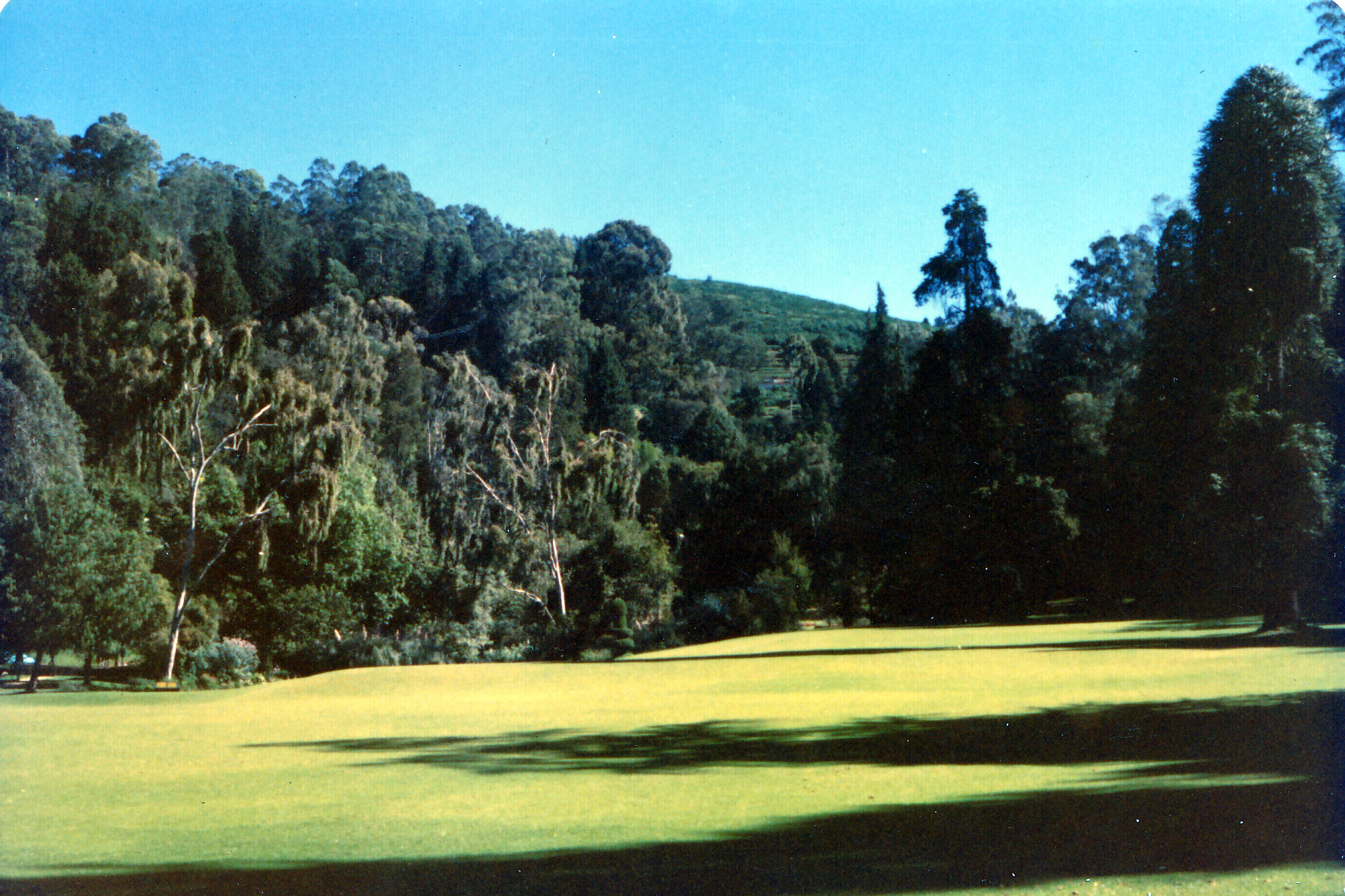Ooty Treescape